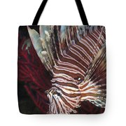 Indonesian Lionfish On A Wreck Site Tote Bag