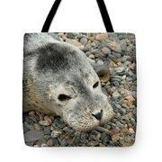 Injured Harbor Seal Tote Bag