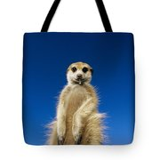 Insect Remains Hang On The Lips Tote Bag