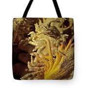 Inside The Sago Palm Tote Bag