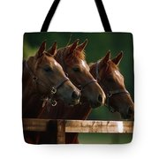Ireland Thoroughbred Horses Tote Bag