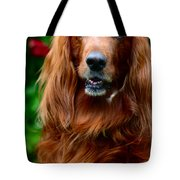 Irish Setter I Tote Bag by Jenny Rainbow
