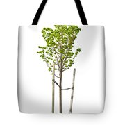 Isolated Young Linden Tree Tote Bag