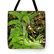 Jack-in The-pulpit_4588 Tote Bag