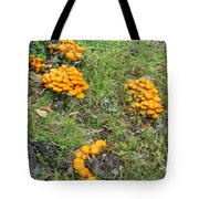 Jack Olantern Mushrooms 15 Tote Bag