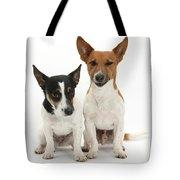 Jack Russell Terrier Dog, Rockie Tote Bag