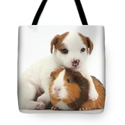 Jack Russell Terrier Puppy And Guinea Tote Bag