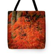 Japanese Maple In Autumn Tote Bag