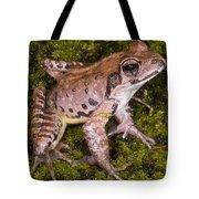 Japanese Ranid Frog Tote Bag