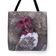 Japanese Snow Monkey Tote Bag