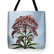 Joe-pye Weed Wildflower - Eupatorium Tote Bag