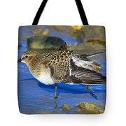 Juvenile Baird's Sandpiper Tote Bag