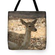 Juvenile Deer Tote Bag