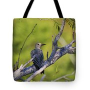 Juvenile Golden-fronted Woodpecker Tote Bag