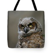 Juvenile Great Horned Owl Tote Bag