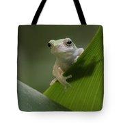 Juvenile Grey Treefrog Tote Bag