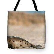 Juvenile Harp Seal Basking In The Sun Tote Bag