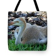 Juvenile Sandhill Crane At Rest Tote Bag