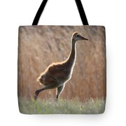 Juvenile Sandhill In The Marsh Tote Bag