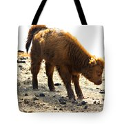 Juvenile Scottish Highlander Cattle Tote Bag