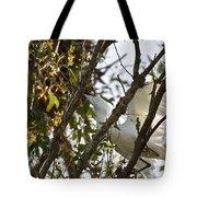 Juvenile Snowy Egret Tote Bag