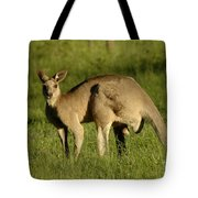 Kangaroo Male Tote Bag by Bob Christopher