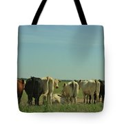 Kansas Cow's With There Backside's To You With Blue Sky And Grass Tote Bag