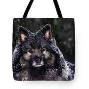 Keeshond Dog, Winnipeg, Manitoba Tote Bag