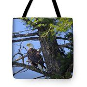 Kettle River Eagle 2012 Tote Bag