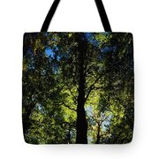 Killarney, Co Kerry, Ireland, Sunlight Tote Bag