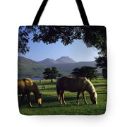 Killarney,co Kerry,irelandtwo Horses Tote Bag
