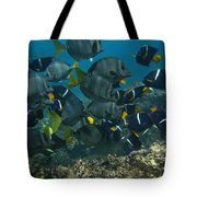 King Angelfish Holacanthus Passer Tote Bag by Pete Oxford