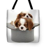 King Charles Spaniel Puppies Tote Bag