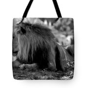 King Of Cats Tote Bag