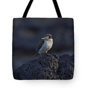 Kingfisher On The Rocks Tote Bag