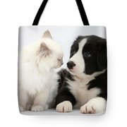 Kitten And Border Collie Pup Tote Bag