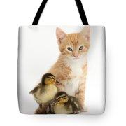 Kitten And Ducklings Tote Bag