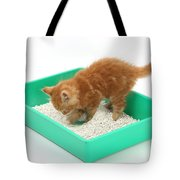 Kitten And Litter Tray Tote Bag
