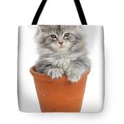 Kitten In Pot Tote Bag