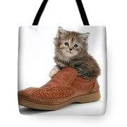 Kitten In Shoe Tote Bag