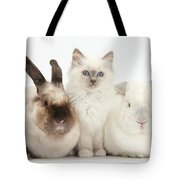Kitten With Rabbits Tote Bag