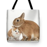 Kitten With Sandy Netherland Tote Bag