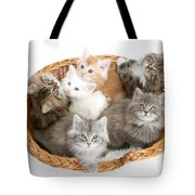 Kittens In Basket Tote Bag