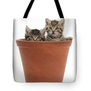 Kittens In Flowerpot Tote Bag