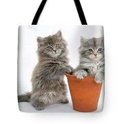 Kittens In Pot Tote Bag