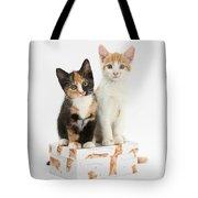Kittens On Birthday Package Tote Bag