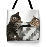 Kittens Playing With Box Tote Bag