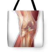 Knee Anatomy Tote Bag