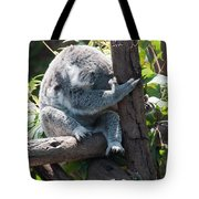 Koala Tote Bag by Carol Ailles