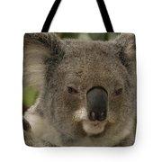 Koala Phascolarctos Cinereus Portrait Tote Bag by Pete Oxford